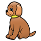 Brown Puppy with yellow collar