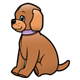 Brown Puppy with purple collar