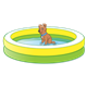 Shallow Pool with brown dog