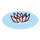 Pink Water Lily floating in water