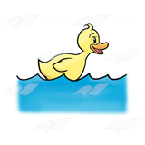 Duck Swimming