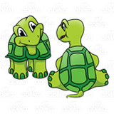 Two Green Turtles