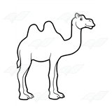 Two-Humped Camel