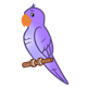 Purple Parakeet on perch