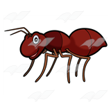 Dark Brown Ant