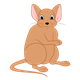Light Brown Mouse