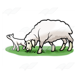 Lamb and Adult Sheep