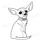Rosy the Chihuahua
