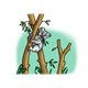 Koala Bear in a eucalyptus forest in a tree eating leaves