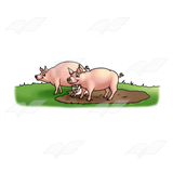 Pig Family in the Mud
