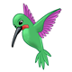 Green Hummingbird hovering