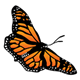 Monarch Butterfly diagonal
