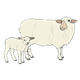 Woolly Sheep ewe and lamb