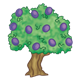 Olive Tree with eleven purple olives