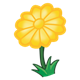 Yellow Flower with twelve petals