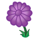Purple Flower with twelve petals
