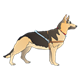 German Shepherd with harness