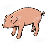 Pig with Curly Tail