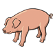 Pig with Curly Tail standing sideways
