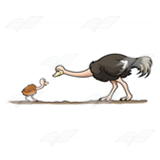 Mother and Baby Ostriches