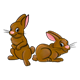 Brown Rabbits two, back-to-back