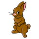 Brown Rabbit one