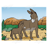 Donkeys in Desert