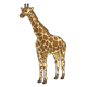Giraffe with yellow and brown pattern