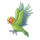 Green Lovebird with blue-tipped wings, flying
