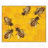 Six Honeybees