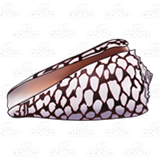 Banded Marble Cone Shell
