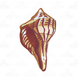 Brown Seashell