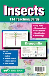 Insects Teaching Cards