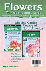Flowers Field and Study Cards