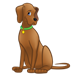 Brown Dog with green collar