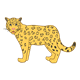 Gold Jaguar with black spots