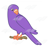 Purple Parakeet