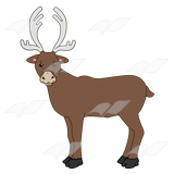 Brown Caribou