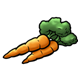 Orange Carrots with green leafy tops