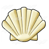 Cream-colored Shell