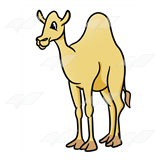 Yellow Camel