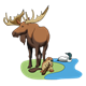 Canadian Wildlife moose, beaver, loon