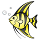 Angelfish yellow with black stripes