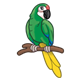 Green Parrot with a yellow tail