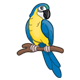 Yellow  Parrot with blue wings and tail
