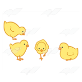 Four Chicks