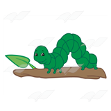 Green Inchworm