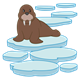 Brown Walrus on an ice floe