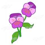 Two Purple Pansies
