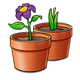 Two Clay Pots with plants